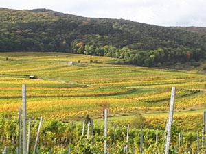 blick in unsere Weingärten